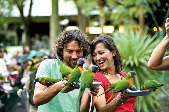 第七天   游览可伦宾野生动物园--Currumbin Wildlife Sanctuary